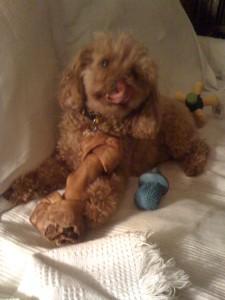 Bone and squeak toy!